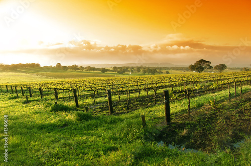 In de dag Australië vineyard sunrise