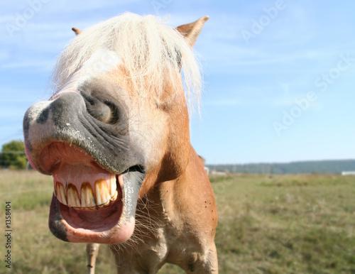 Foto auf AluDibond Pferde pferdegrimasse