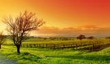 Winnica we wszystkich kolorach natury