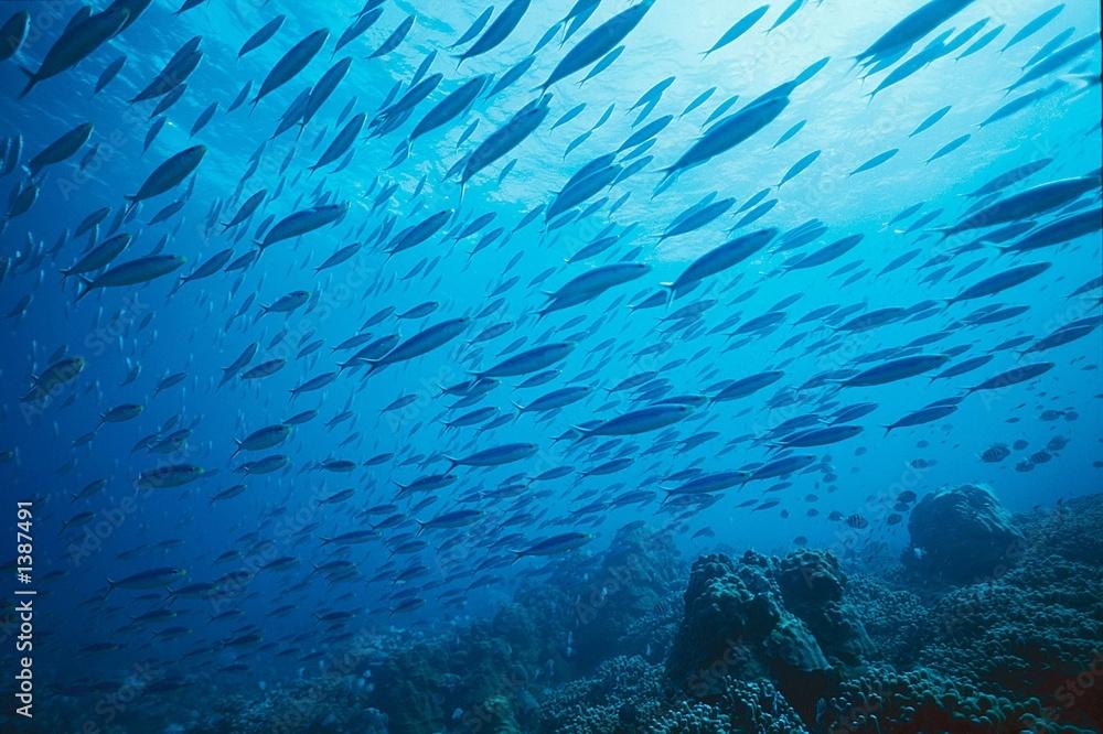 Fototapeta banc de poissons