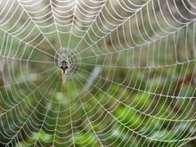 Spiderweb In The Meadow
