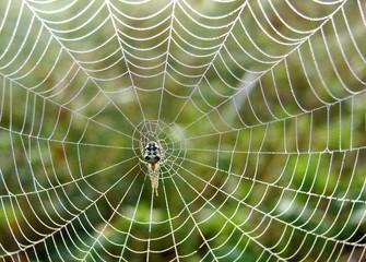 beautiful spiderweb