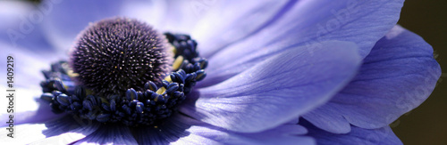 Cadres-photo bureau Fleuriste fleur bleue