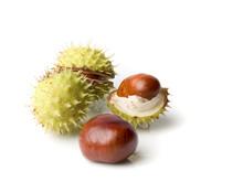 Four Chestnut