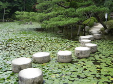 Stepping Stones In The Garden ...