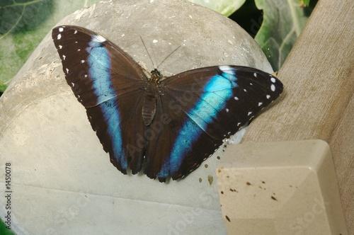 Foto op Plexiglas Stenen in het Zand blue and black butterfly
