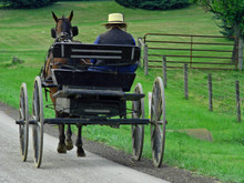 Amish Man Driving Horse Pulled...