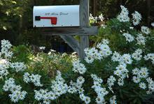 Mail Box-2