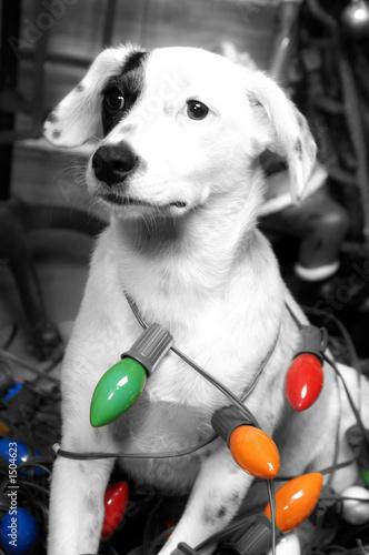 Fotomural dobby dog