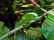 Contemplative Frog --- Waxy Mo...