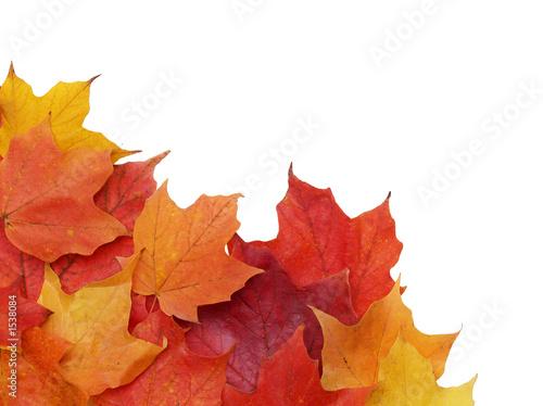 Fotografie, Obraz  fall leaves