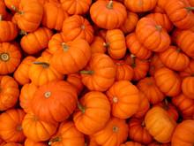 Miniature Pumpkins 1