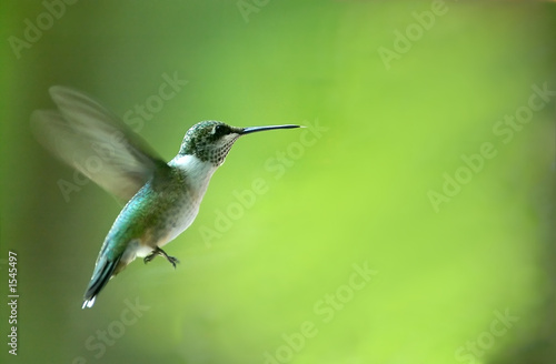 Deurstickers Vogel hummingbird