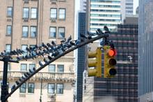 New York - Traffic Light With ...