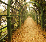 autumn vine alley