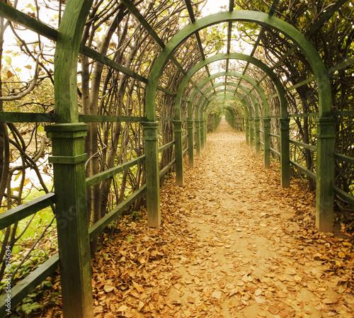 autumn vine alley