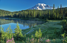 Mt. Rainier Early Morn