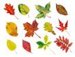 Leinwandbild Motiv fall leaf collection