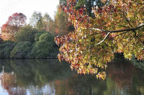 Foto op Canvas Bomen Autumn scene