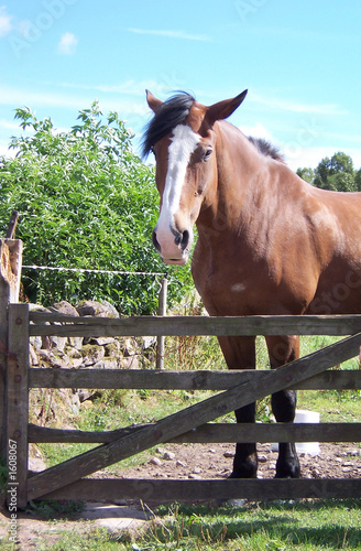 Canvas Prints Horses horse