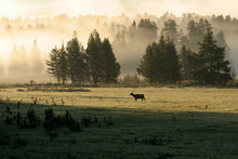Yellowstone Fog