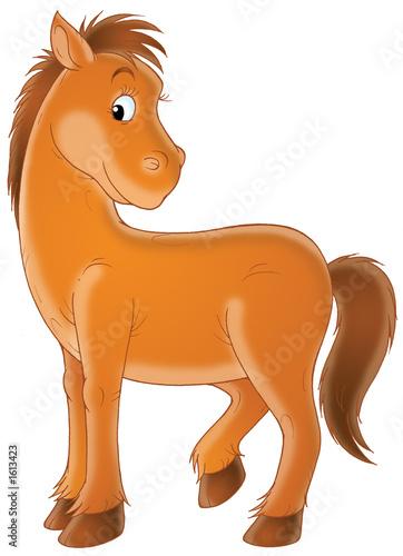 Foto-Rollo - brown horse (von Alexey Bannykh)