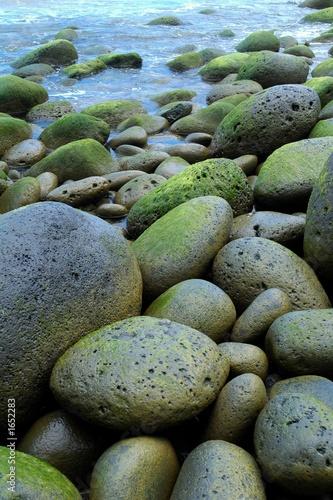 Foto-Schiebegardine Komplettsystem - green rocks (von Lori Swadley)