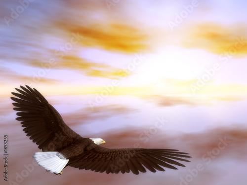 Photo  eagle 1