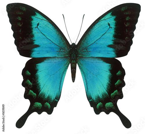 Valokuvatapetti swallowtail butterfly