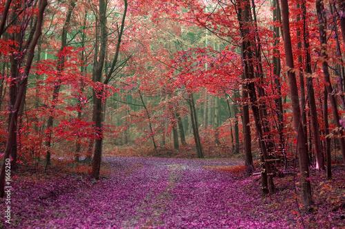 Brun profond la forêt enchantée
