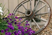 Wagon Wheel And Flowers