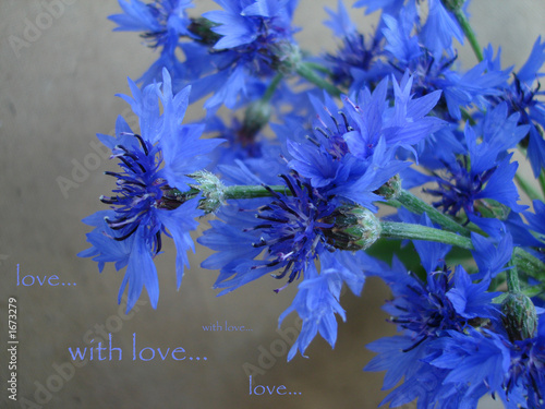 Photo Stands Floral woman card with blue carnation and words - with love