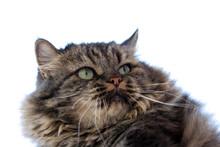Adorable Cat Portrait