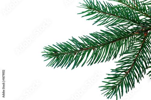 Fotografie, Obraz  christmas tree #3
