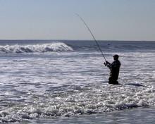 The Surf Fisherman