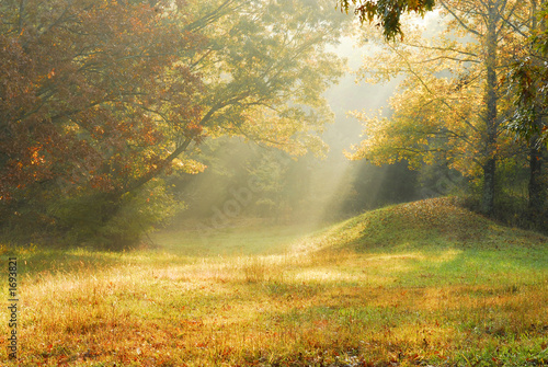 Fototapeta foggy rural scene obraz