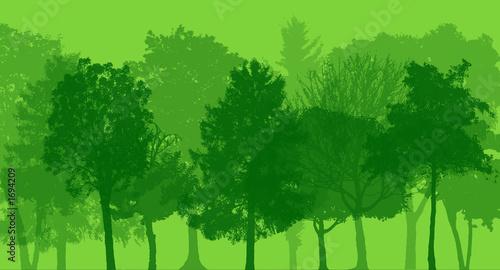 arbres, forêt Canvas Print