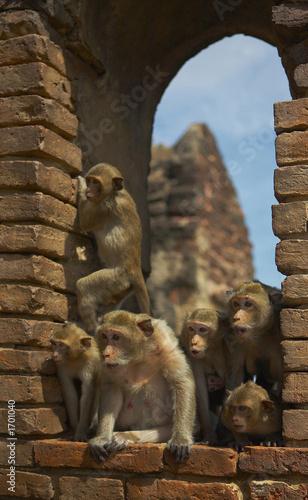 In de dag 4159 monkey-9