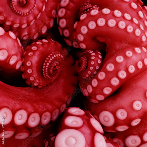 Canvas Print japanese boiled octopus