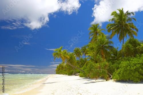 Foto op Plexiglas Caraïben forest on the beach in indian ocean