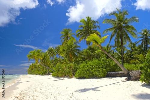 Foto op Plexiglas Caraïben nice tropical forest on the beach in indian ocean