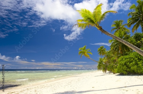 Deurstickers Strand tropical forest in indian ocean