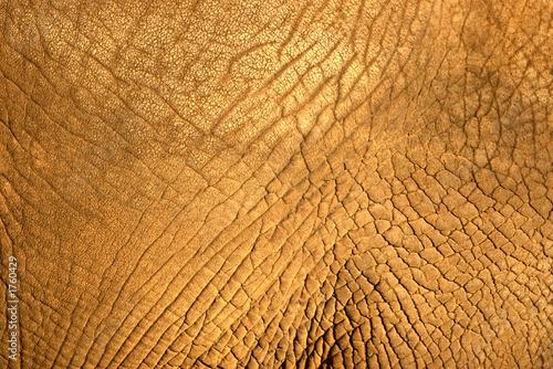 elephant skin texture Wallpaper Mural