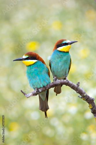 Garden Poster Personal enamored birds