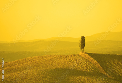 Photo Stands Melon tuscan landscape in yellow sunset light