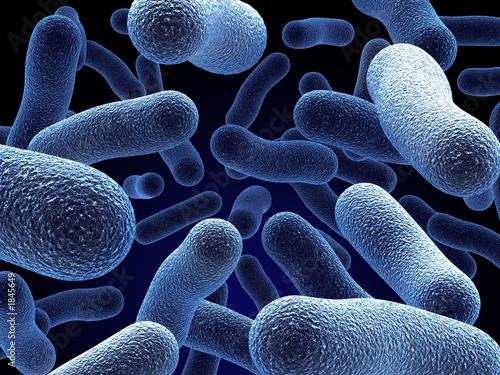 Fotografie, Obraz  bacteria