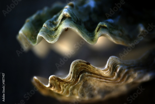 Poster Nature shell