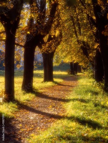 jesienna-aleja