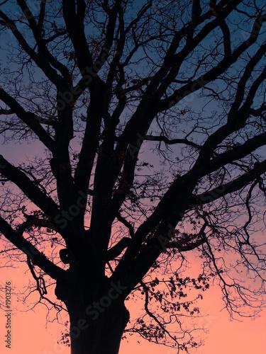 Photo sur Toile Oiseaux sur arbre baum 4