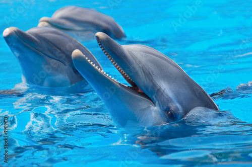 Photo sur Toile Dauphin happy dolphins